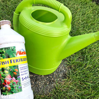 Alaska Fish Fertilizer, backyard gardening, gardening, How to Fertilize Vegetables using Alaska Fish Fertilizer, vegetable fertilizer